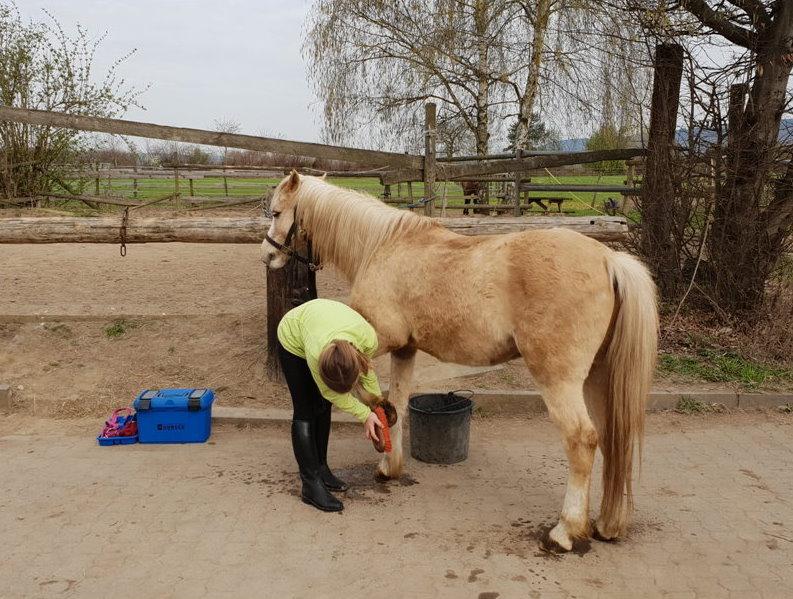 pony zur verfügung